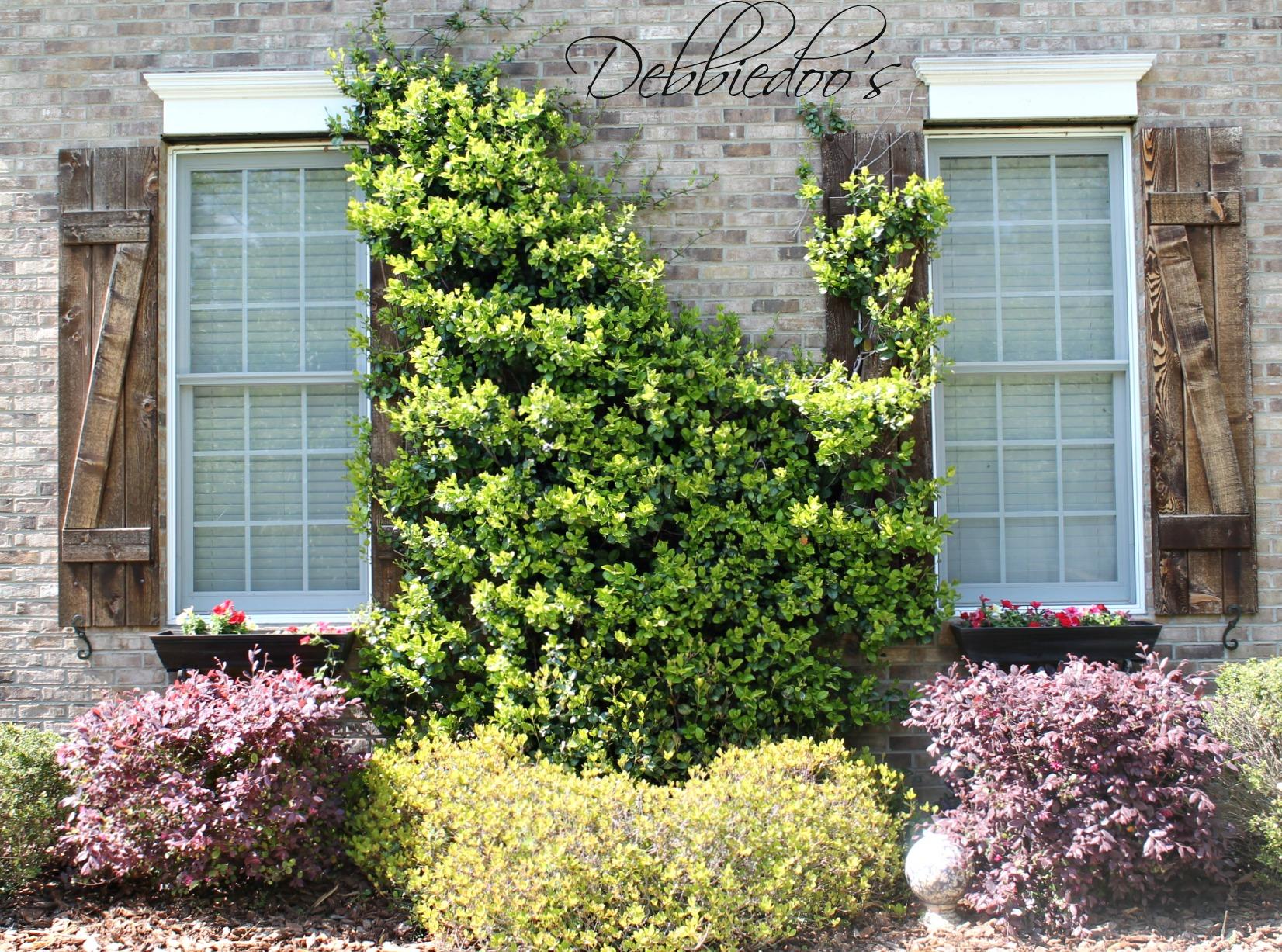 Carolina gardens 024