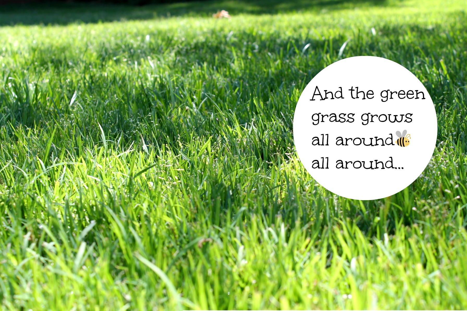 Green healthy lawn with zoysia plugs