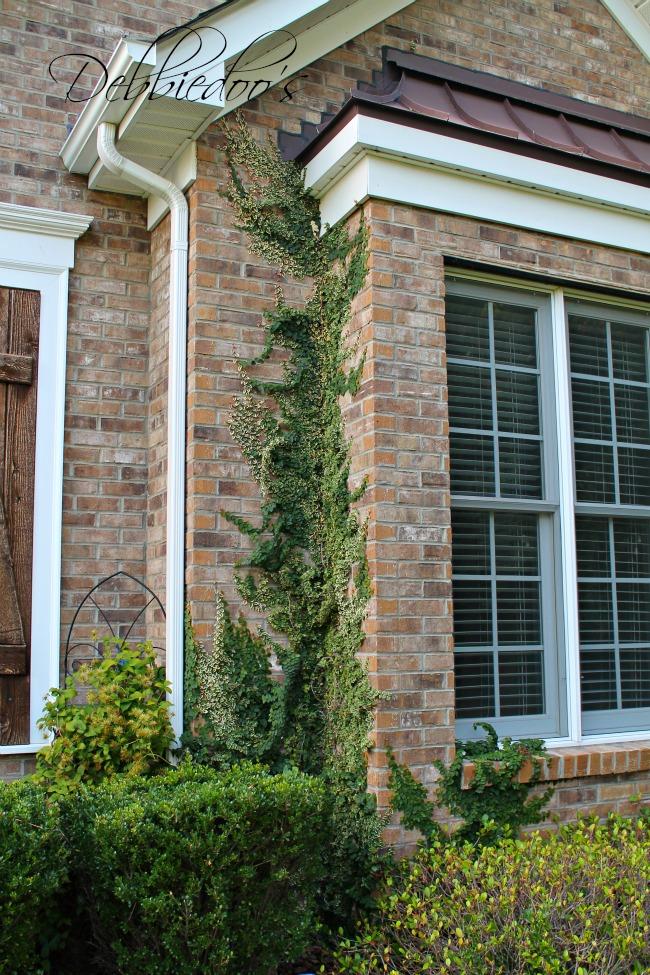 Carolina gardens 003
