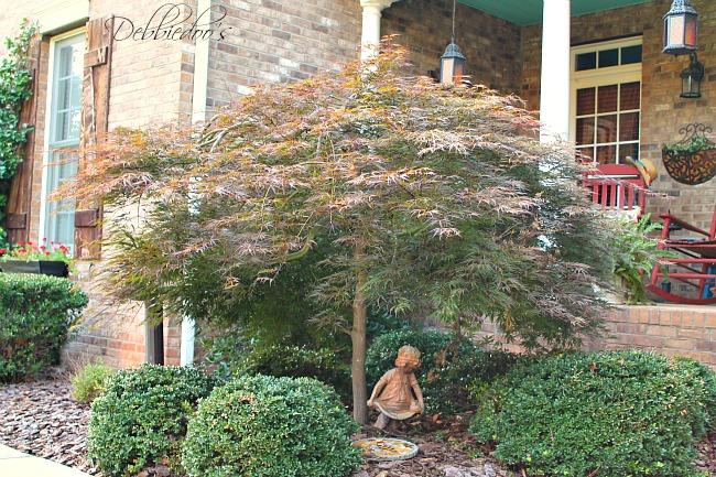 Carolina gardens 005