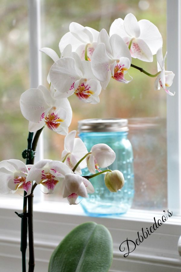 orchid and chick art 007