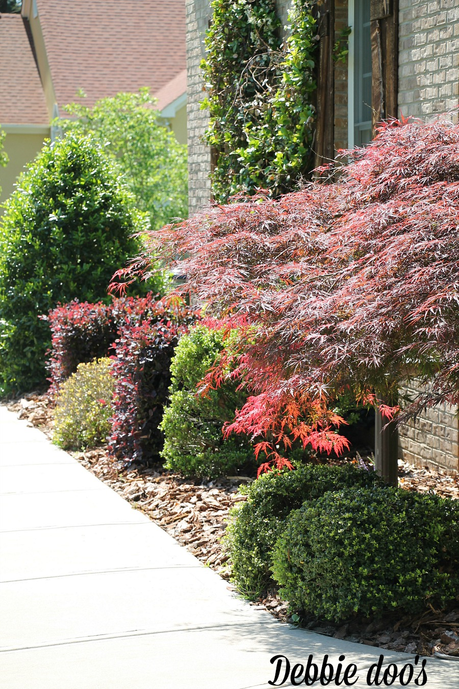 Low maintenance gardens debbiedoos for Best low maintenance garden