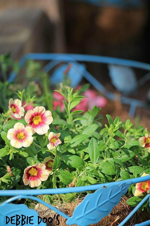 outdoor garden 014