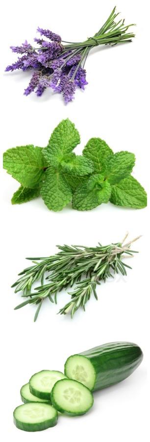 Fresh herb water