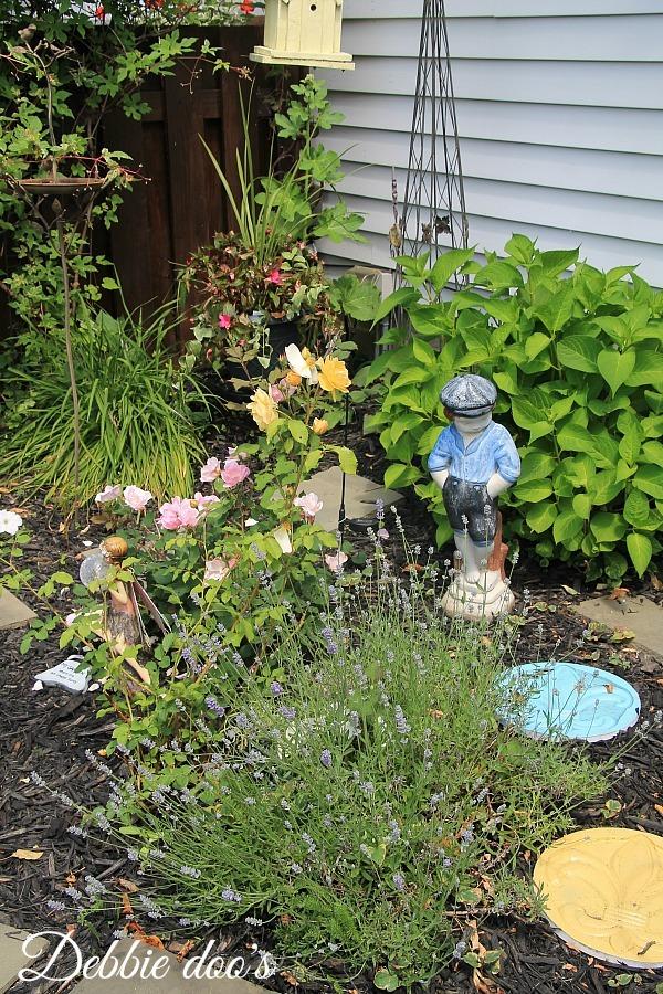 Fresh lavender garden