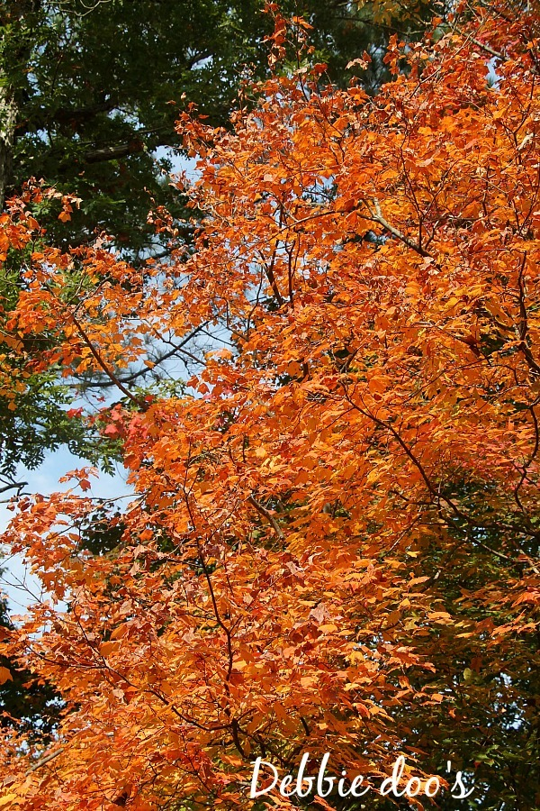 outdoor fall scenery 001