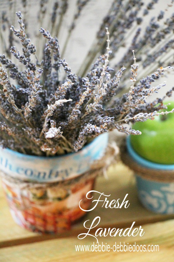 Fresh lavender in a French country terracotta pot