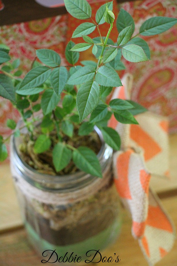 mason jar planter idea