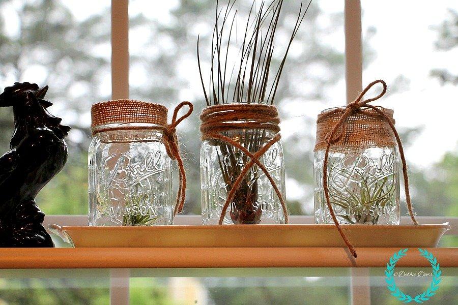 air plant mason jars