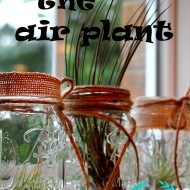 Air plant and burlap mason jar idea