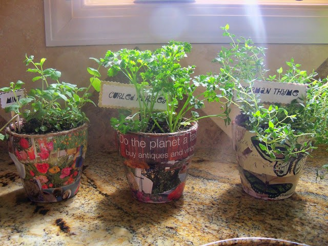 mini herb pots for the kitchen mod podged with garden magazine