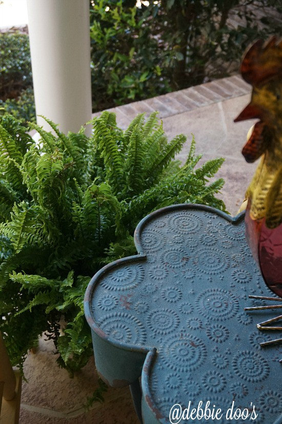Fern and roosters on patio