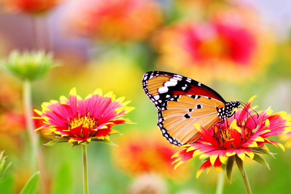 How to start your own butterfly garden