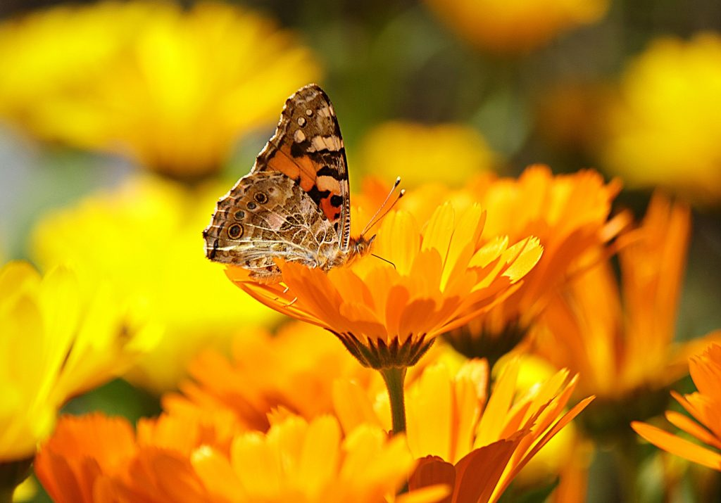 Start your own butterfly garden today
