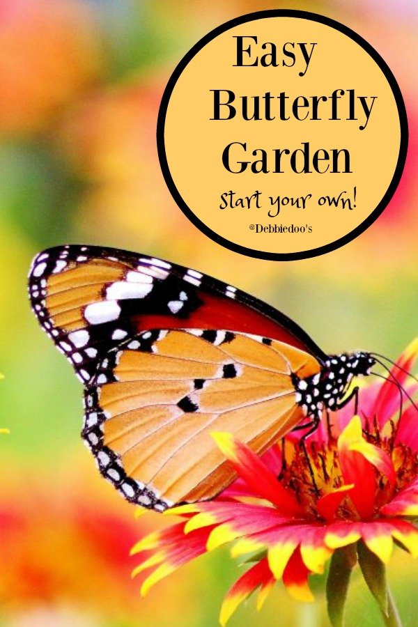 How to start your own butterfly garden with these 5 easy tips and steps